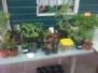 Plantjesmarkt en Werkzaterdag 2011